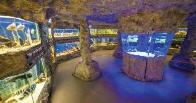 Природонаучният музей в Пловдив ще работи безплатно за деца до 7 години